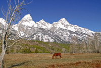 Tetons and Horse