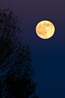 Full Moon - Bosque del Apache National Wildlife Refuge